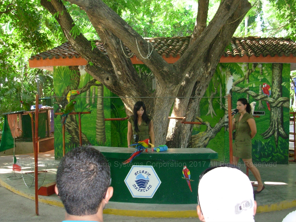 Bird show at aquarium in Mazatlán, Sinaloa, Mexico